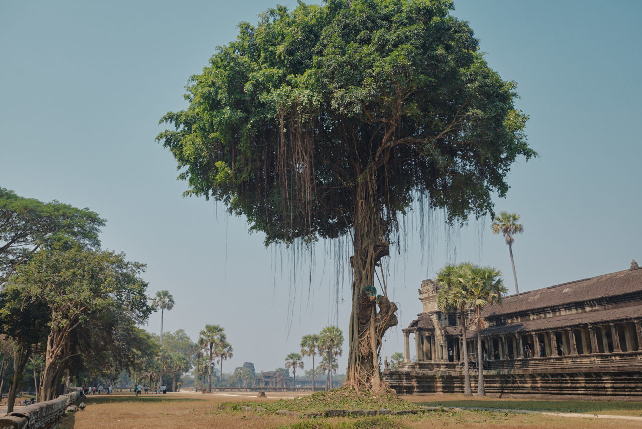 Angkor Archeological Park Cambodia Photographed by Lucian Niculescu
